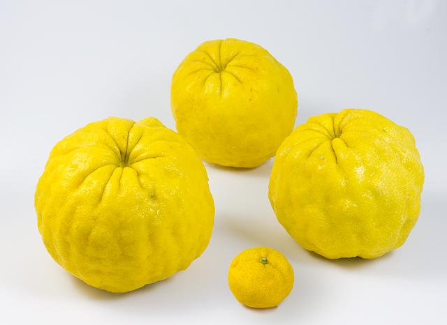 手前が直径5cmくらいの花柚。3個ある大きいのが鬼柚子で直径が16cmぐらい。
